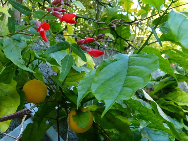 l'été indien des Fous Jardiniers - Page 3 Campto10