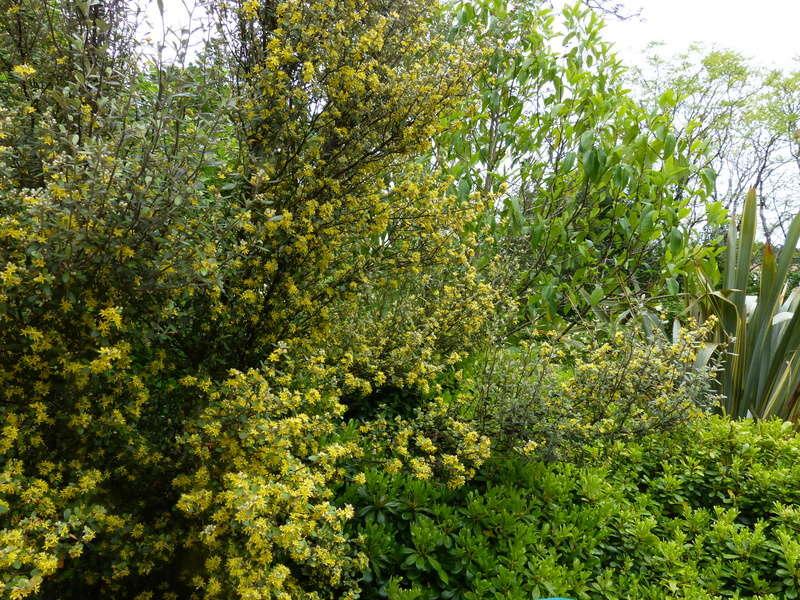 les jardins sont beaux en mai ! Coroki10