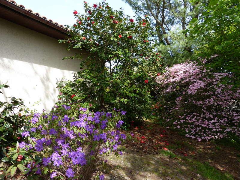Cornus florida - cornouiller à fleurs  - Page 2 Florai10