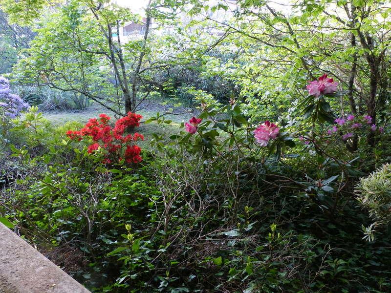 les jardins sont beaux en mai ! - Page 2 Florai17