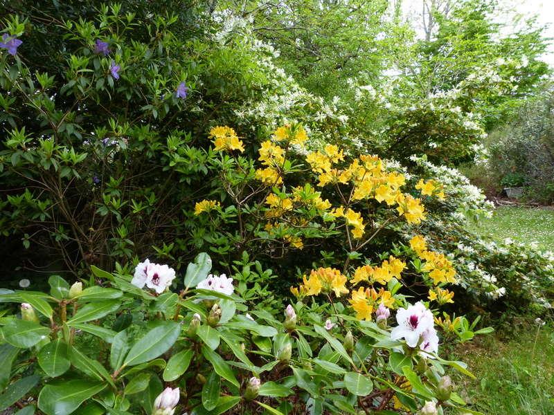 les jardins sont beaux en mai ! - Page 2 Florai18