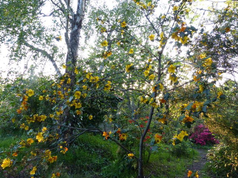 les jardins sont beaux en mai ! - Page 2 Fremon10