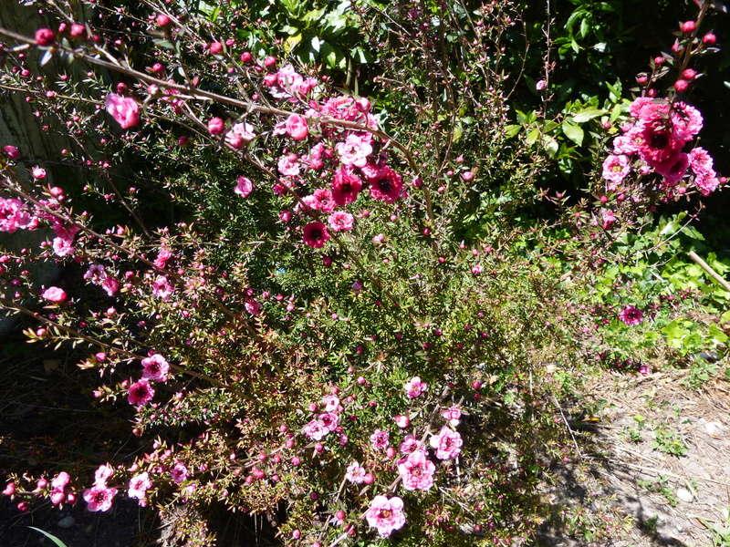les jardins sont beaux en mai ! - Page 2 Leptos13