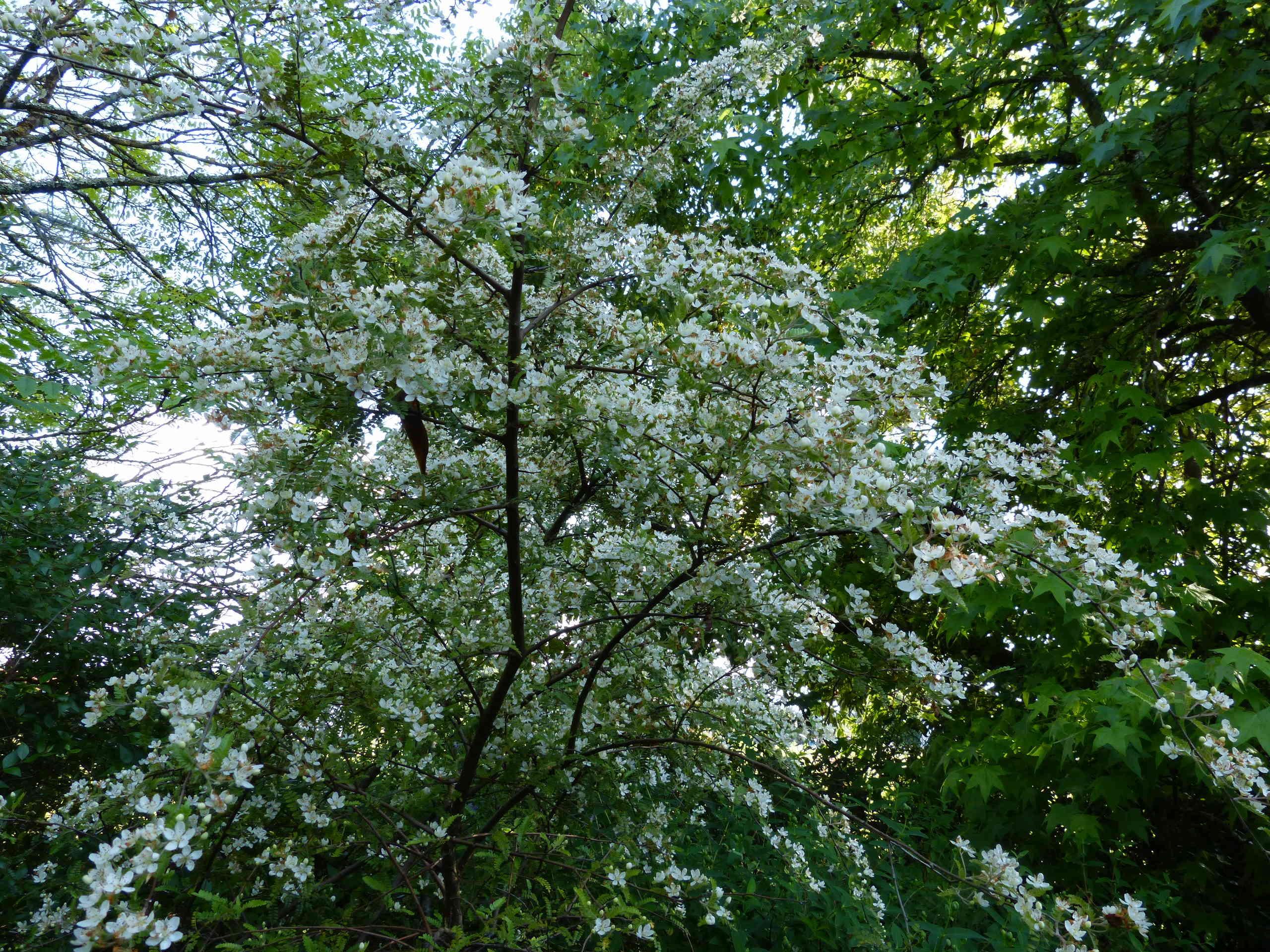 les jardins sont beaux en mai ! - Page 4 Osteom10