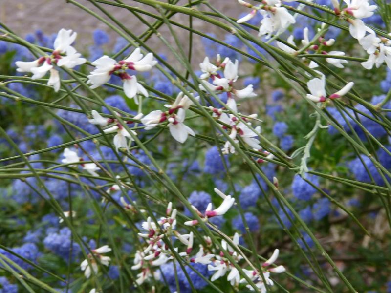 les jardins sont beaux en mai ! Retama10