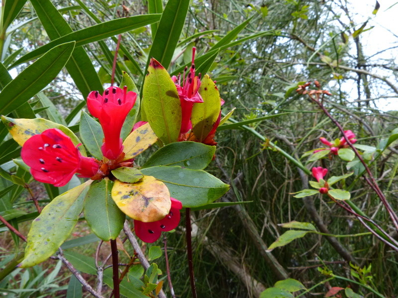 explosion florale Rhodod23