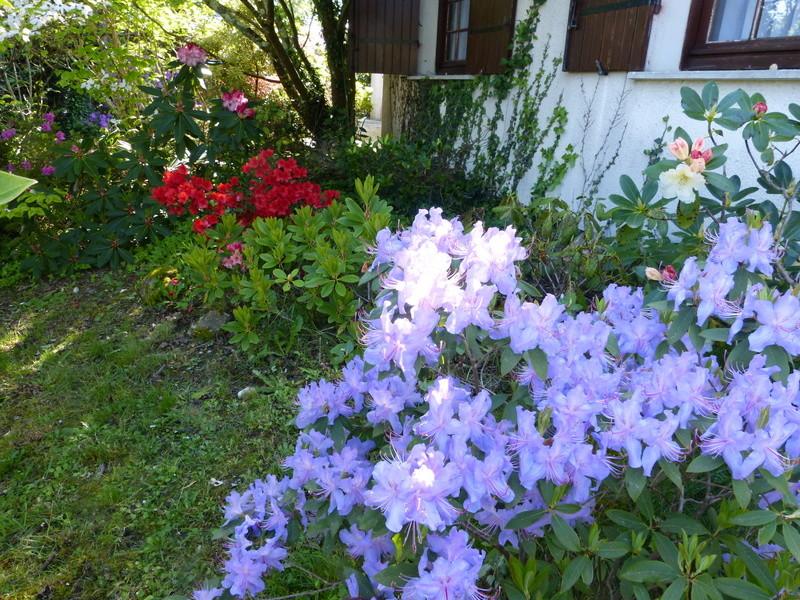 les jardins sont beaux en mai ! - Page 2 Rhodod67
