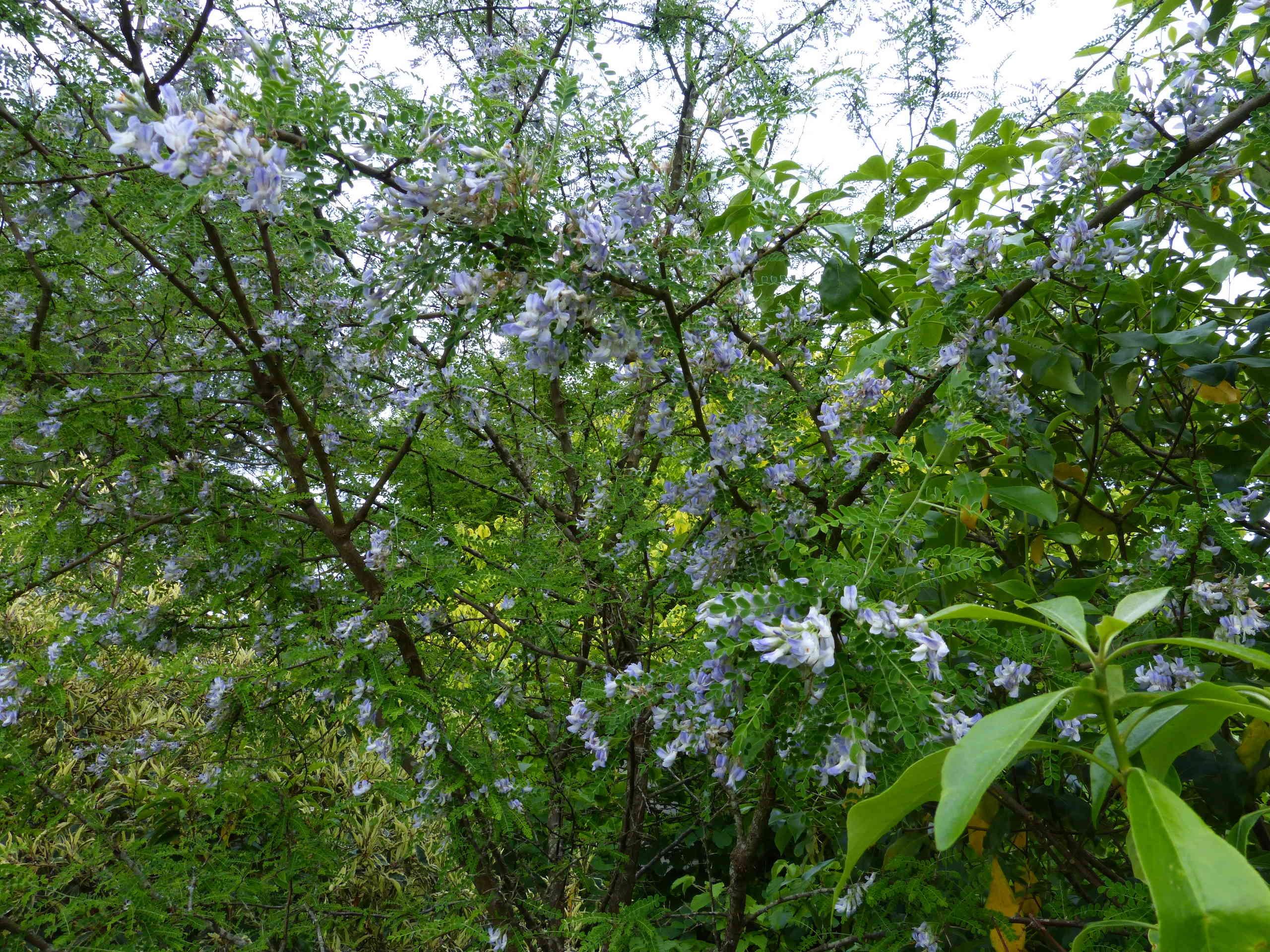les jardins sont beaux en mai ! - Page 4 Sophor11
