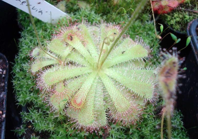 Les Plantes de Ted82 [tome 3] - Page 3 Dsc08914