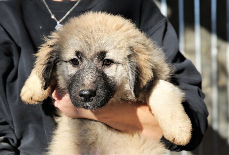 Nikita, chienne très sociable, née en octobre 2017 Nikita11