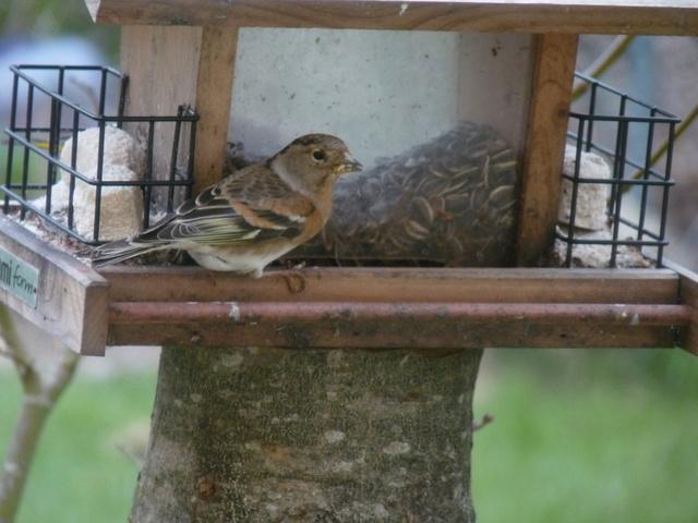 les visiteurs à plumes sauvages - 3 - Page 2 Oiseau14