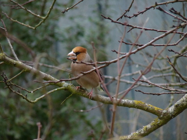 les visiteurs à plumes sauvages - 3 - Page 2 Oiseau15
