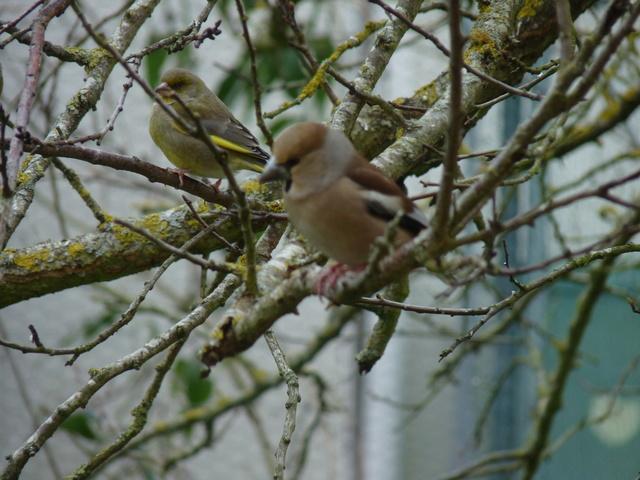 les visiteurs à plumes sauvages - 3 - Page 2 Oiseau16