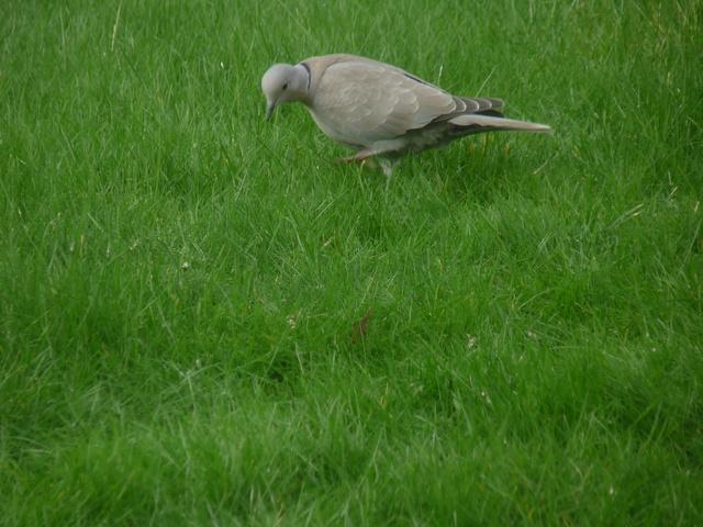 les visiteurs à plumes sauvages - 3 - Page 2 Oiseau17