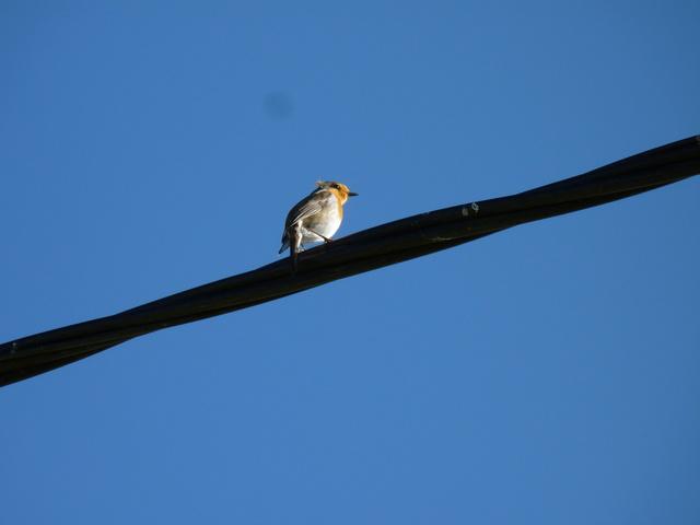Identification oiseaux P1040810