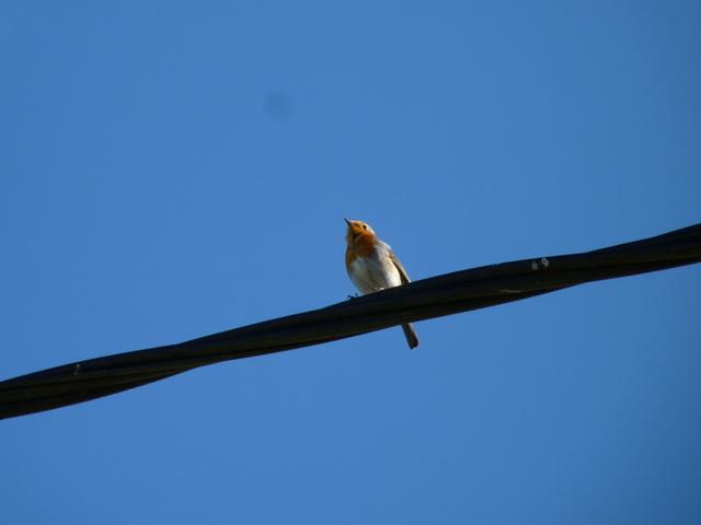 Identification oiseaux P1040811