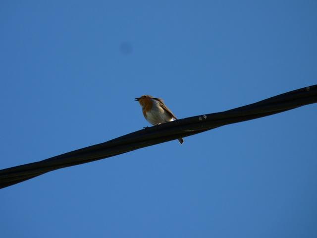Identification oiseaux P1040812