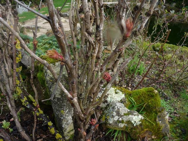 couleurs d'hiver au jardin  P1050020