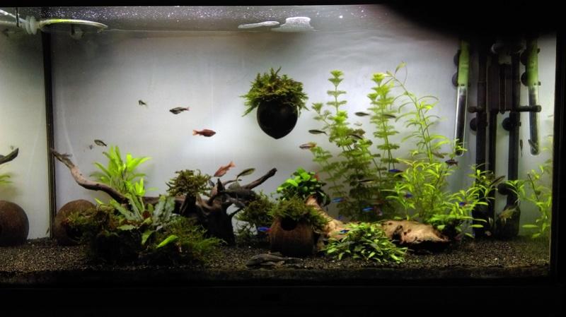 Algues marron Imag0116