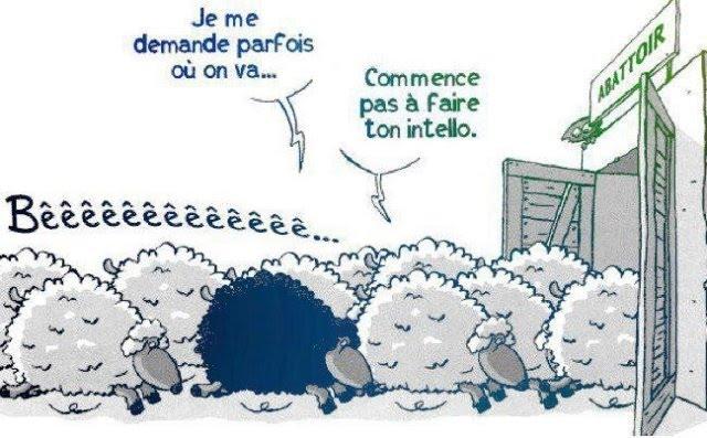 C'est voté ! Le département des Hautes-Alpes reste à 90km/h Mouton10