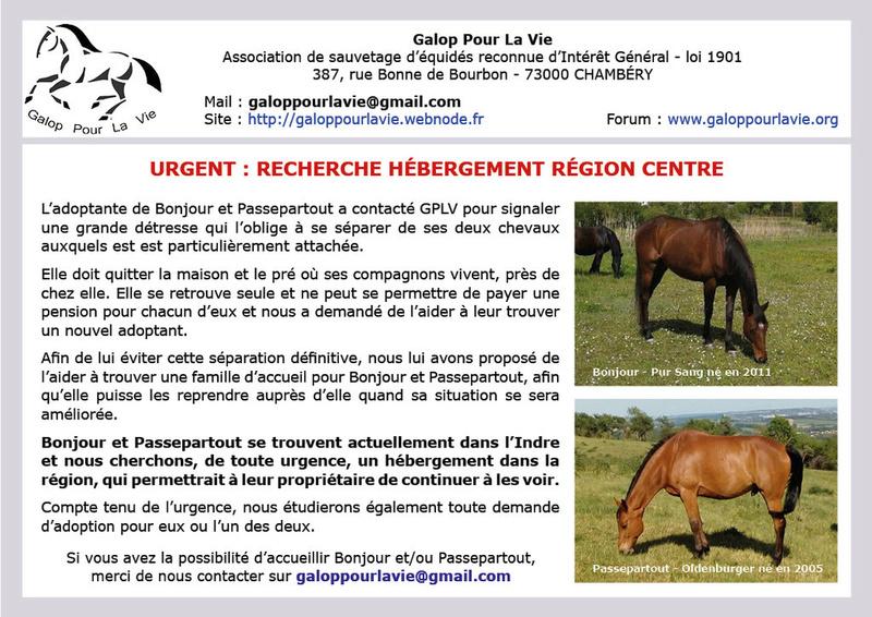 BONJOUR - PS né en 2011 - adopté en septembre 2016  - Page 2 Bonjou10