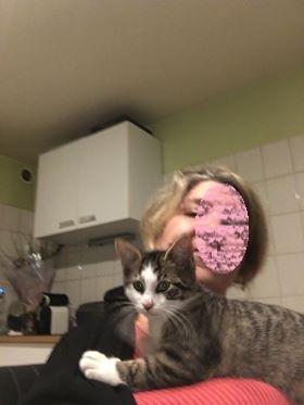 nouvelles de MARLEY le chat 23584610
