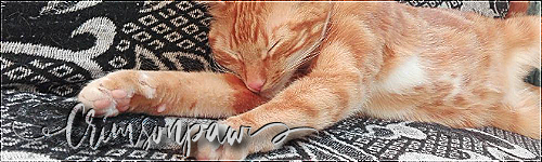 Kitten search - One last time - Pagina 2 Crimso13