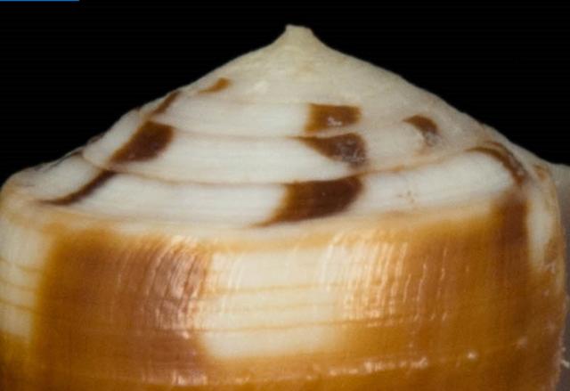 Identification cone 9 Captur10