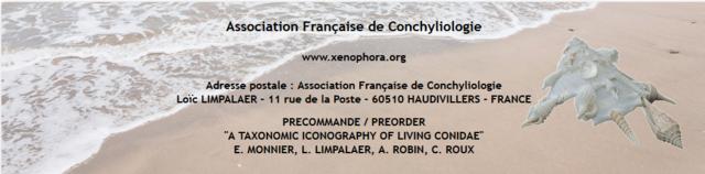 Nouveau livre sur les cônes : A TAXONOMIC ICONOGRAPHY OF LIVING CONIDAE MLRR Captur11