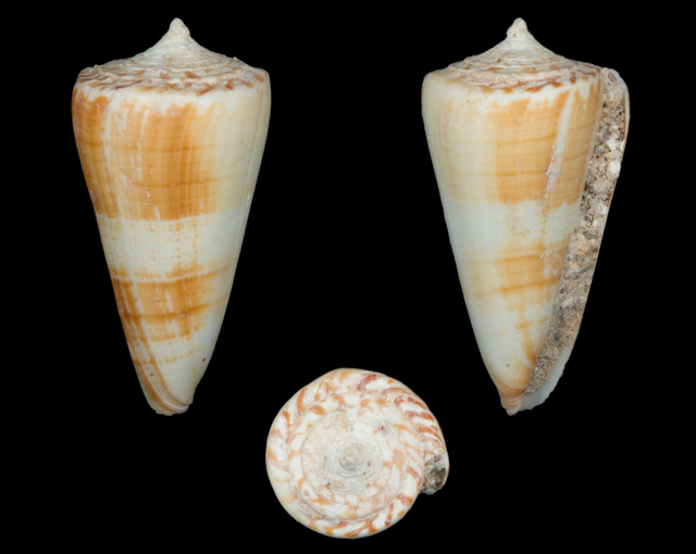Identification cone 1 Co11010
