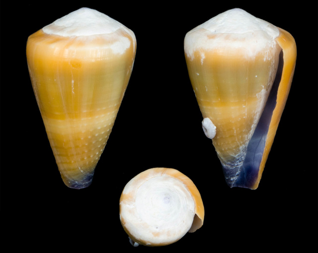 Identification cone 16 Co19810