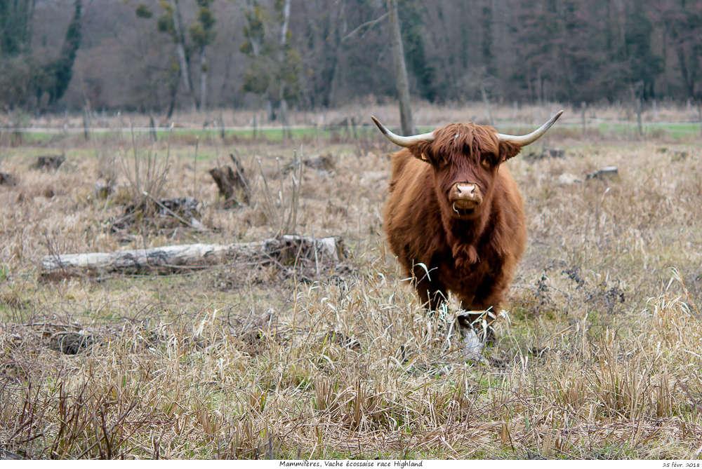 Une histoire drôlement vache ! Vache_20