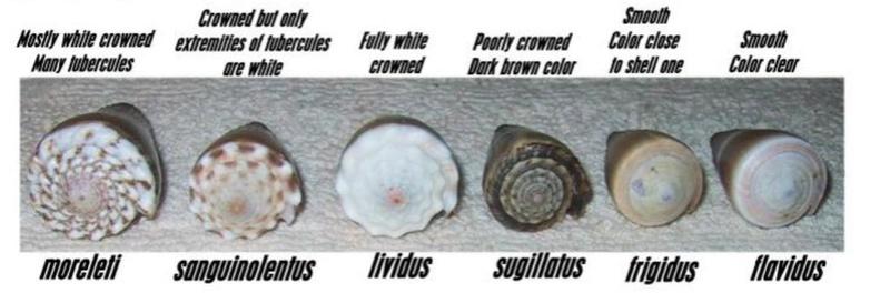 Identification cone 15 Identi10