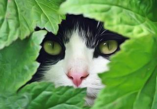 Système immunitaire du chat: remèdes naturels 405b2110