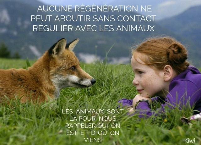 Les enseignements de nos animaux E7241210