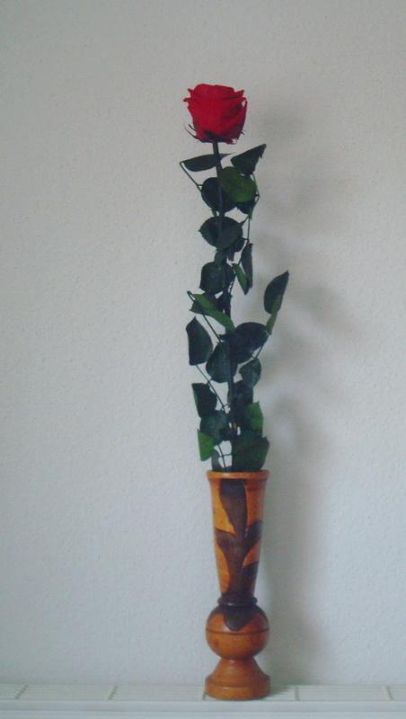 Hibiscus d ' Egypte  ( et autres fleurs ) - Page 2 Rose_211
