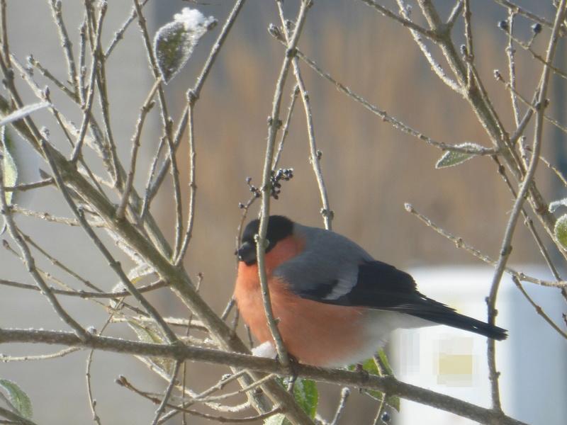 Au jardin ce matin... P1100522