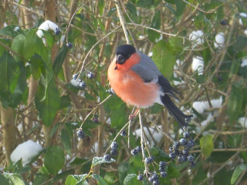 Au jardin ce matin... P1100523