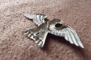 petit aigle allemand ?? Cimg6212