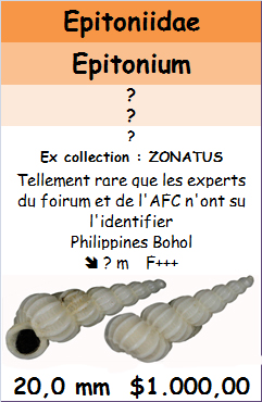 Epitonium à identifier Bruno10