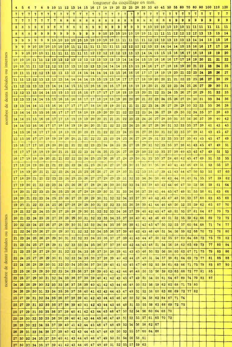 Bistolida stolida rubiginosa - (Gmelin, 1791) Dents10