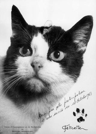 Une statue pour Félicette à Paris, première chatte dans l'espace ? Fylice10