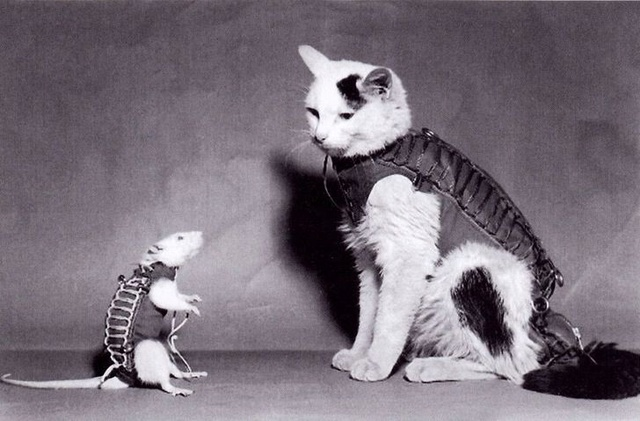 Une statue pour Félicette à Paris, première chatte dans l'espace ? Hector10