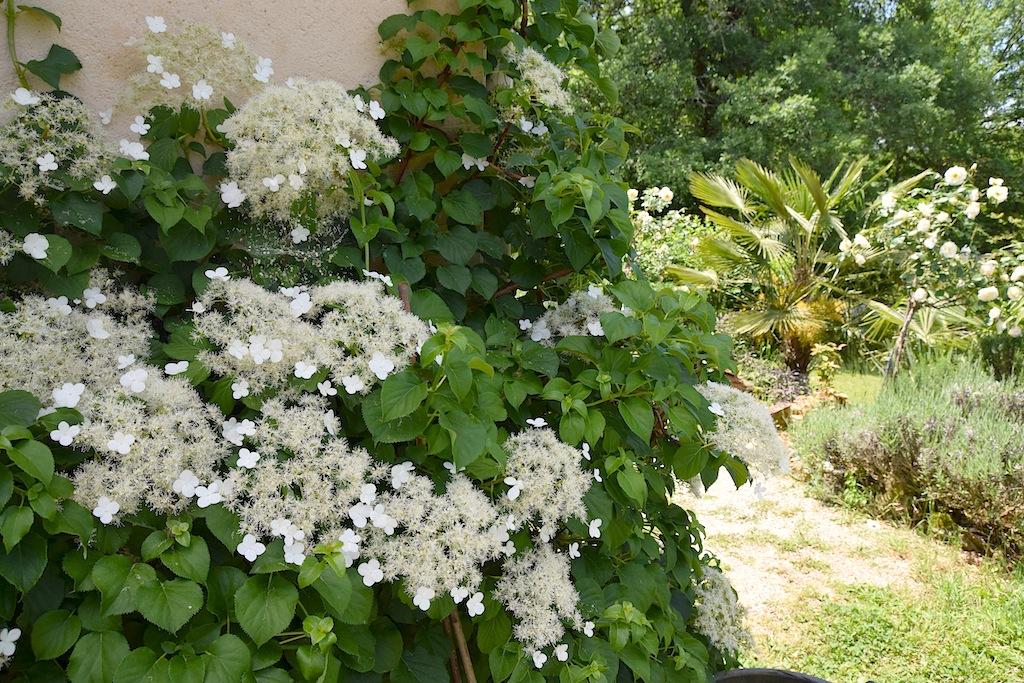 les jardins sont beaux en mai ! - Page 4 Dsc_0434
