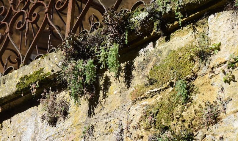 flore des vieux murs, rochers  et rocailles naturelles - Page 7 Dsc_0510