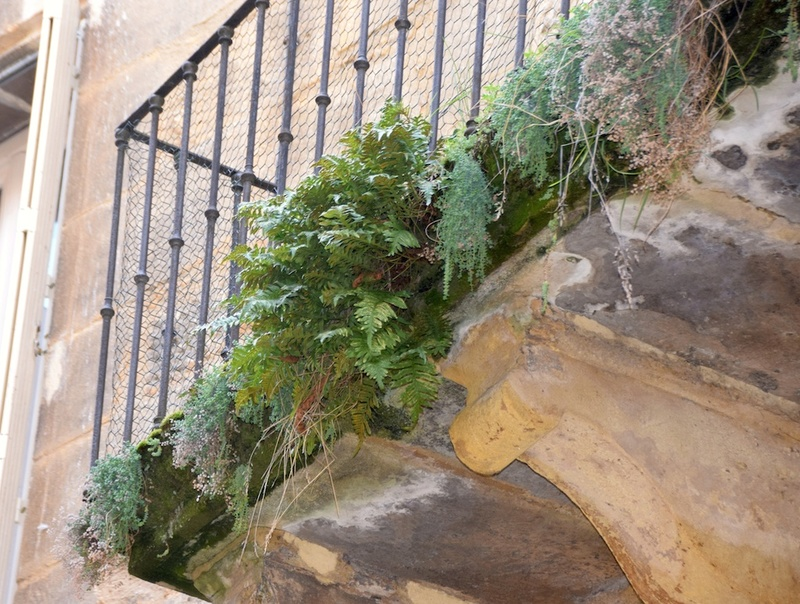 flore des vieux murs, rochers  et rocailles naturelles - Page 7 Dsc_0511
