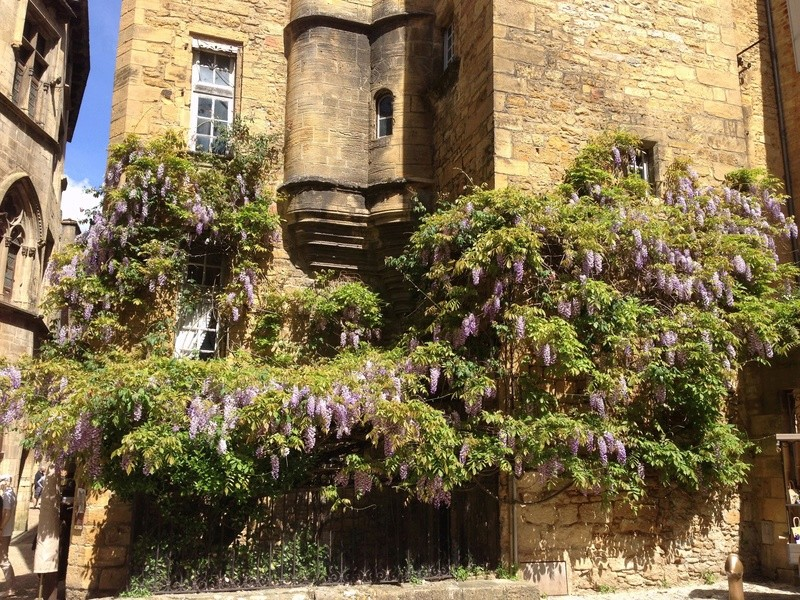 Wisteria - les glycines  - Page 6 Img_3520