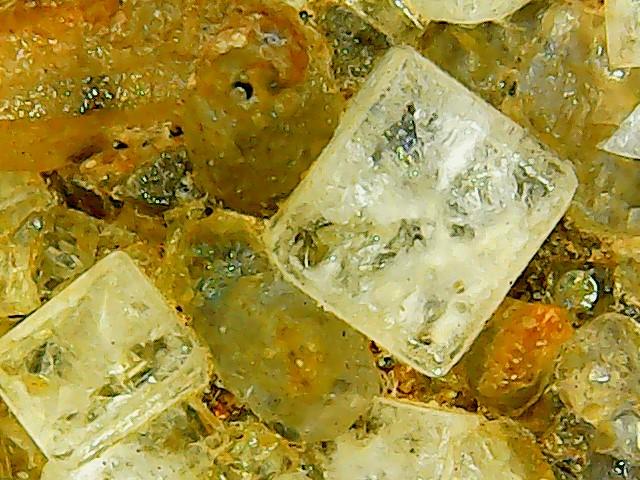 Fluorine du Bois du Roptai (Ave et Auffe) Win_2154
