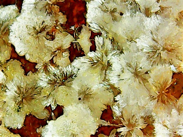 Aragonite et ou calcite Win_2837