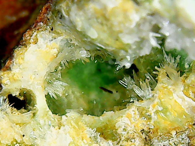 Aragonite et ou calcite Win_2847